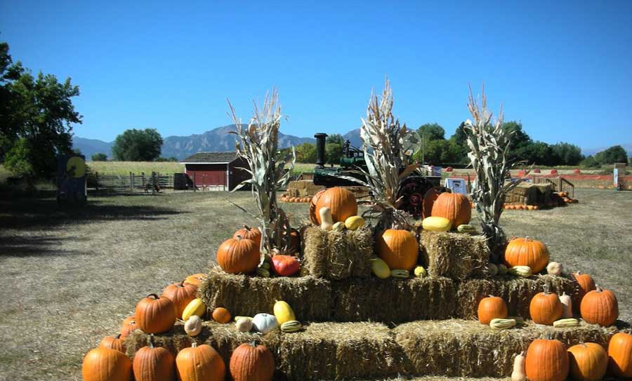 Cottonwood Farms Pumpkins on display