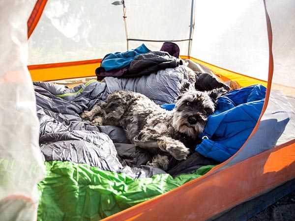 Puppy sleeping in a tent.