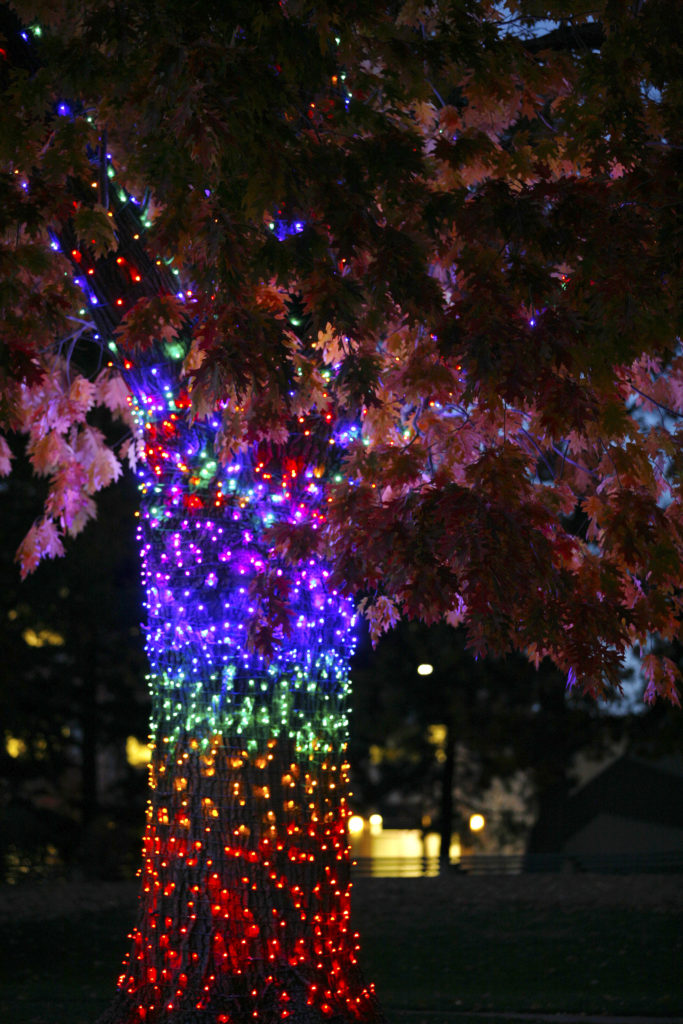 A holiday-lit tree in Boulder's Central Park